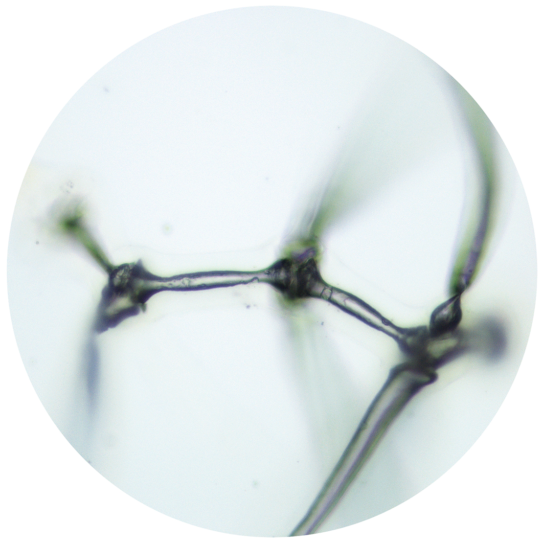 Sean Miller, Microscopy of Dust Sample Collected from Frankfurt Museum of Modern Art, Frankfurt, Germany.