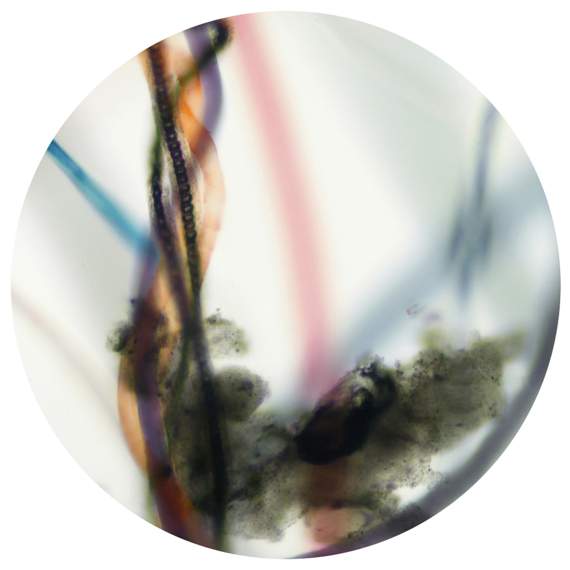Sean Miller, Microscopy of Dust Sample Collected from Centre Pompidou, Paris, France.