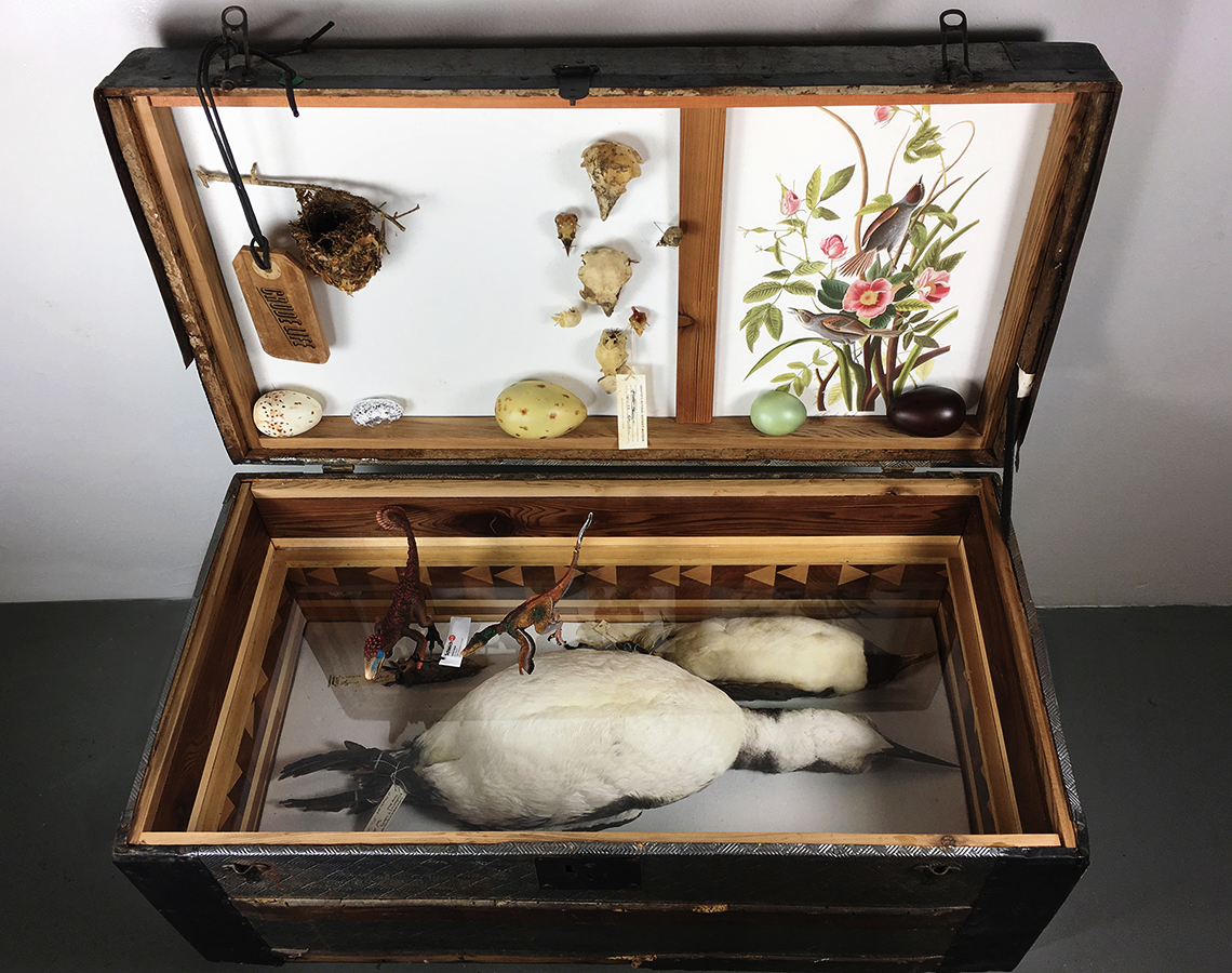 Crude Life Portable Biodiversity Museum for the Gulf of Mexico (Ornithology Gallery), Sean Miller in collaboration with Brandon Ballengée, 2017
