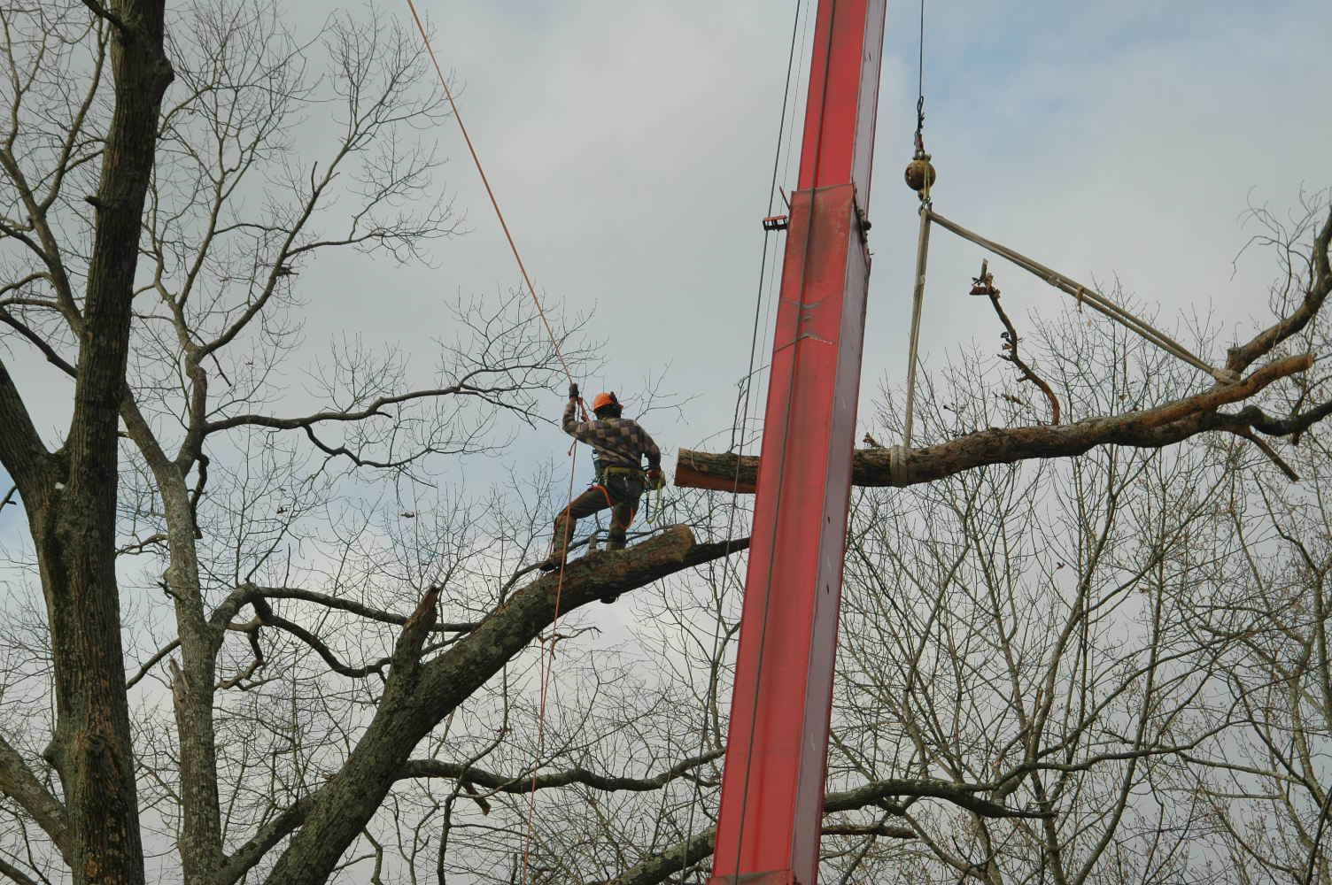 Dec 21 2010 Trees (181) (1).JPG