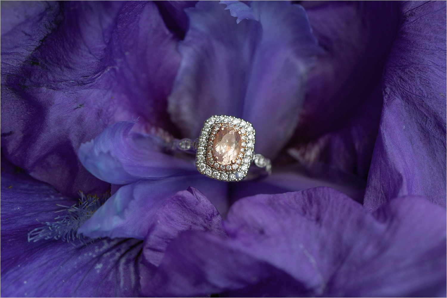 Cassandra's ring is beyond stunning! This purple flower was so pretty, they just seemed like a good pair! :)