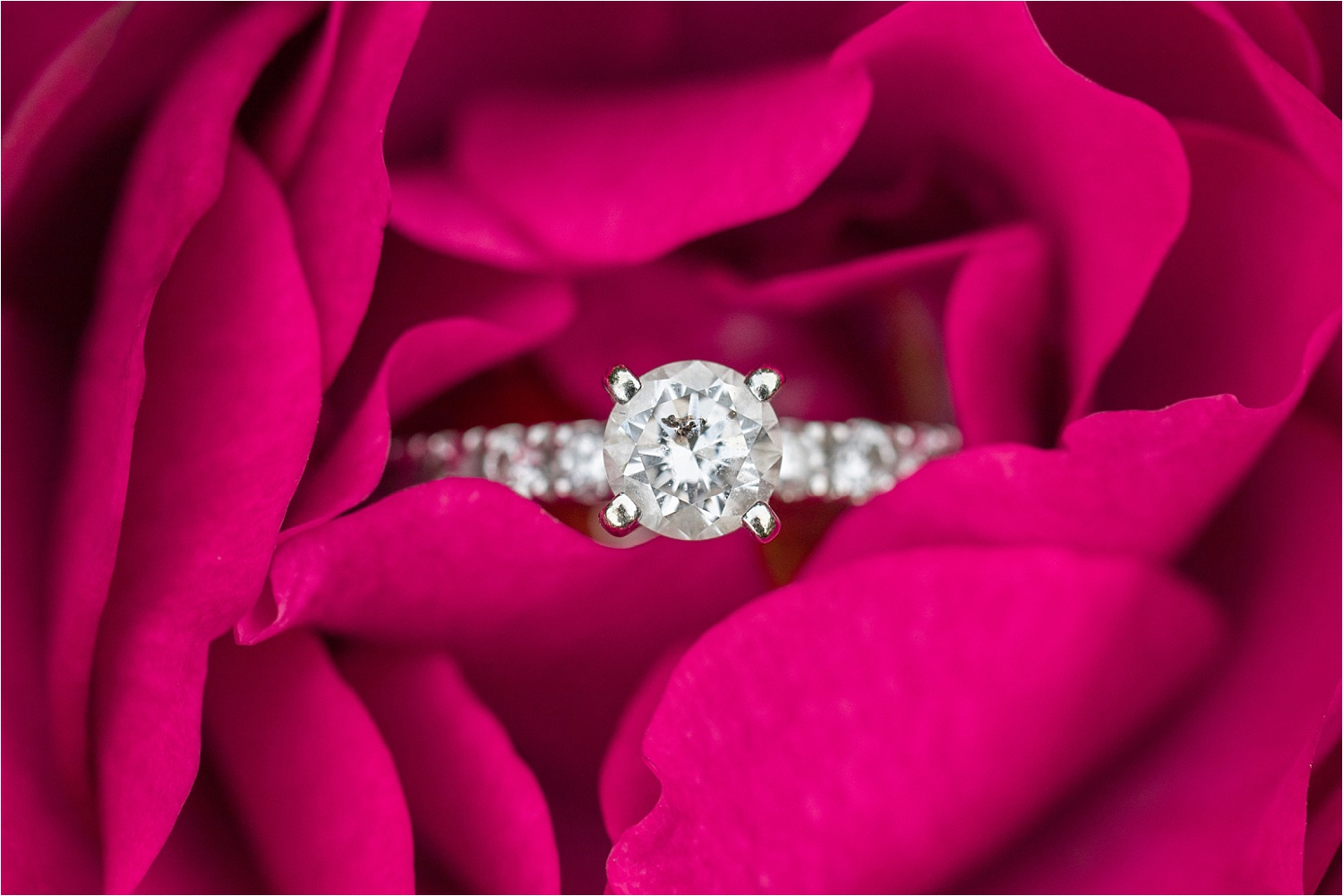 gorgeous diamond ring in rose at fellows riverside gardens