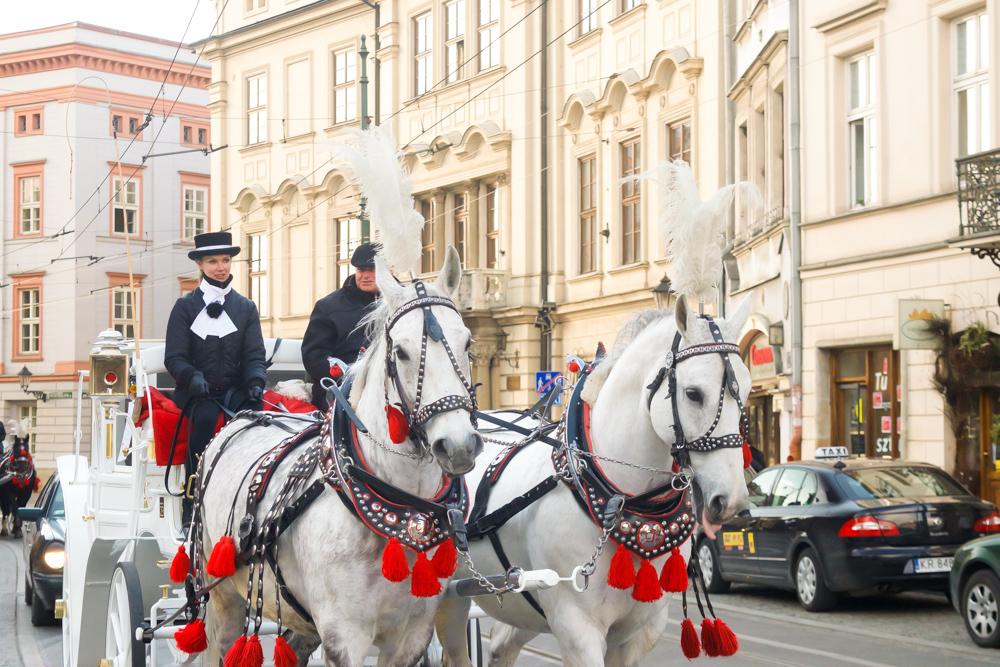Horses in the medieval square Krakow Poland