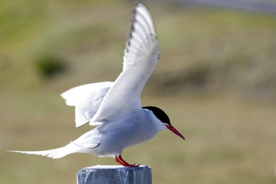 Best places to do some bird watching in Iceland