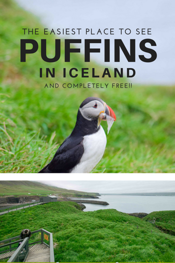 The best place I found to see puffins in Iceland that no one is talking about. Puffins are EVERYWHERE on the island and I was amazed at just how close I could get to them. Read on for more.