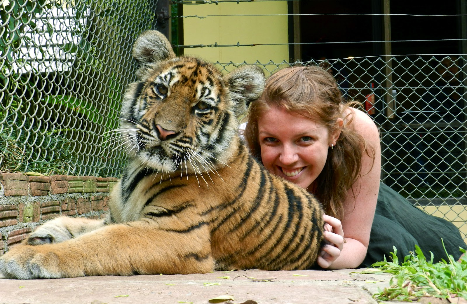 tiger-kingdom.JPG