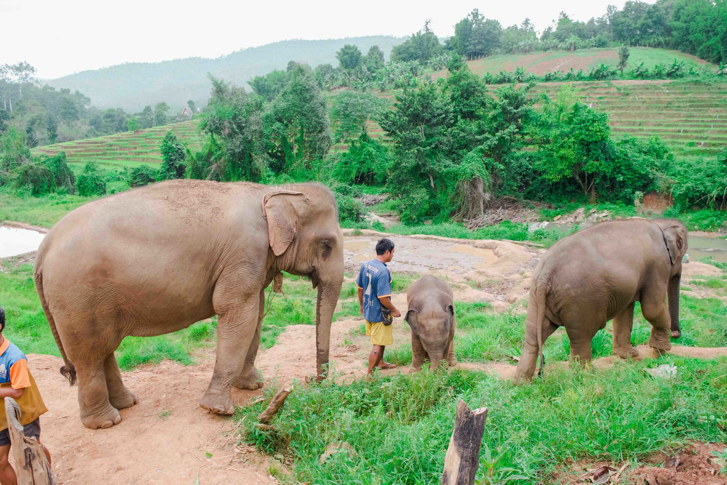 Please Don't Ride Elephants in Thailand — Where to Next | Budget Travel  Tips