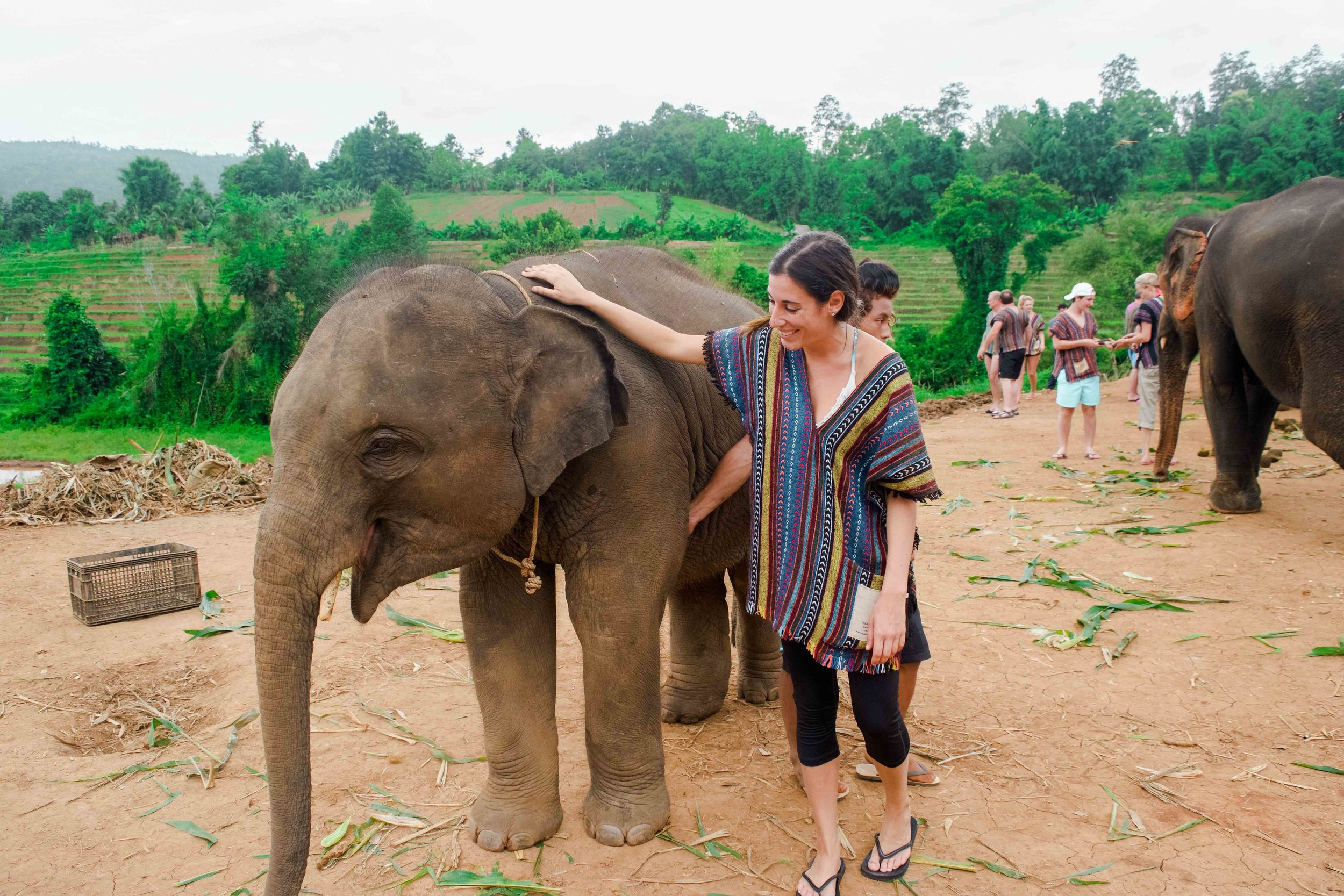 Baby elephant at Elephant Nature Park in Chiang Mai