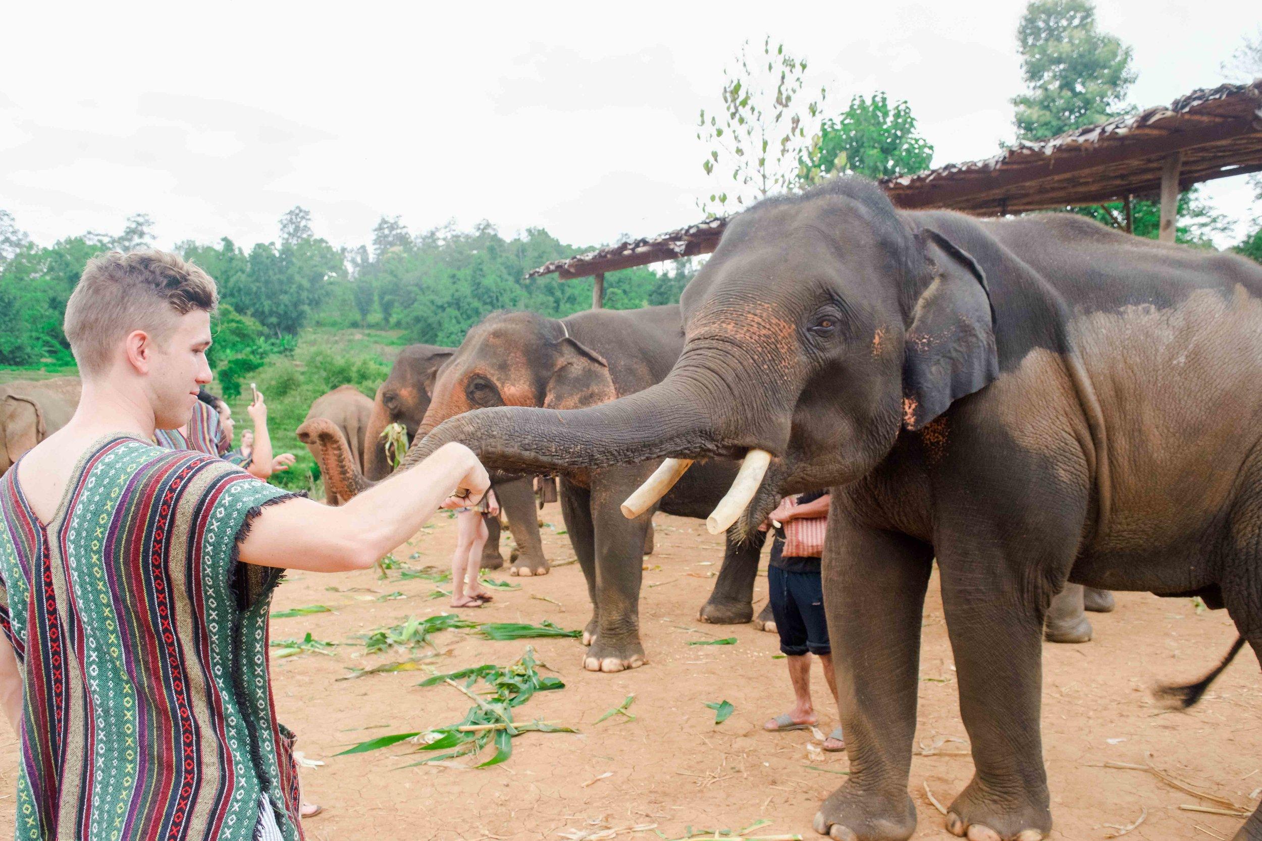 Feeding an elephant at Elephant Nature Park in Chiang Mai