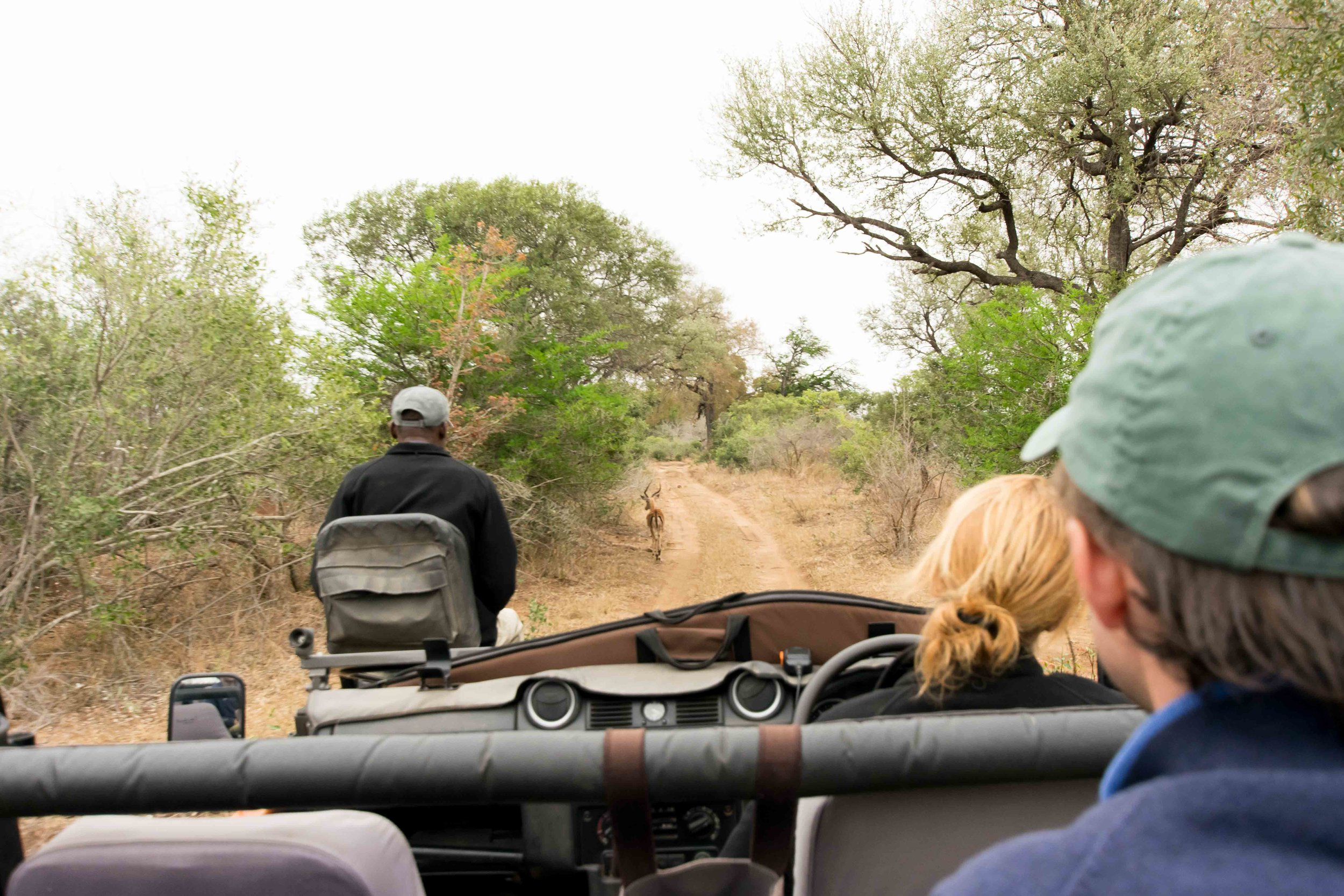 Out on a game drive at Lion Sands Ivory Lodge
