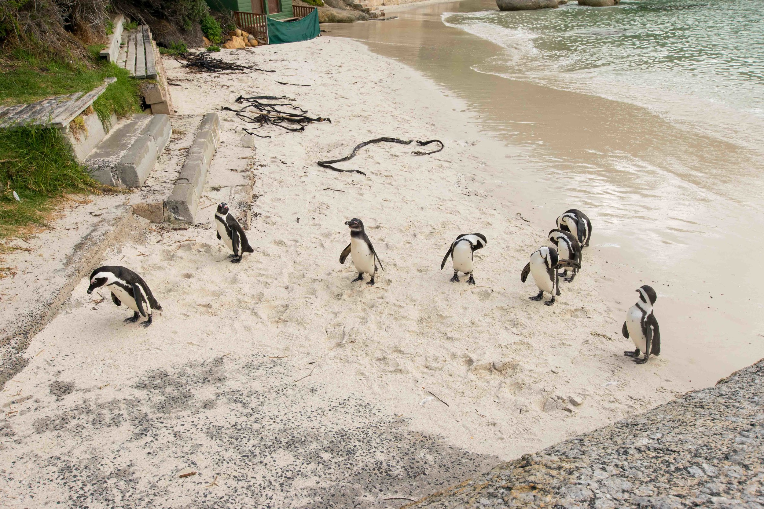 Seeing the penguins in South Africa is one of the top things to do