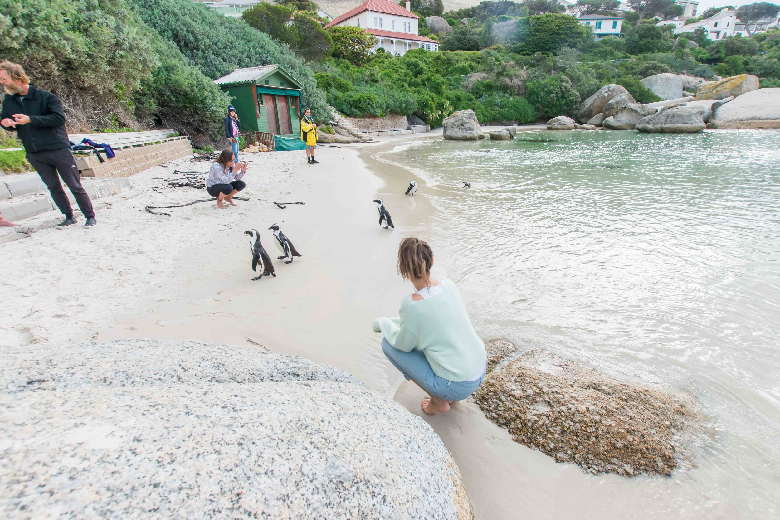 Do not visit Cape Town with out taking a trip to see the penguins