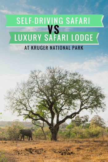 Not sure about if you should self-drive or stay at a lodge while in Kruger National Park in South Africa... check out this article to help!