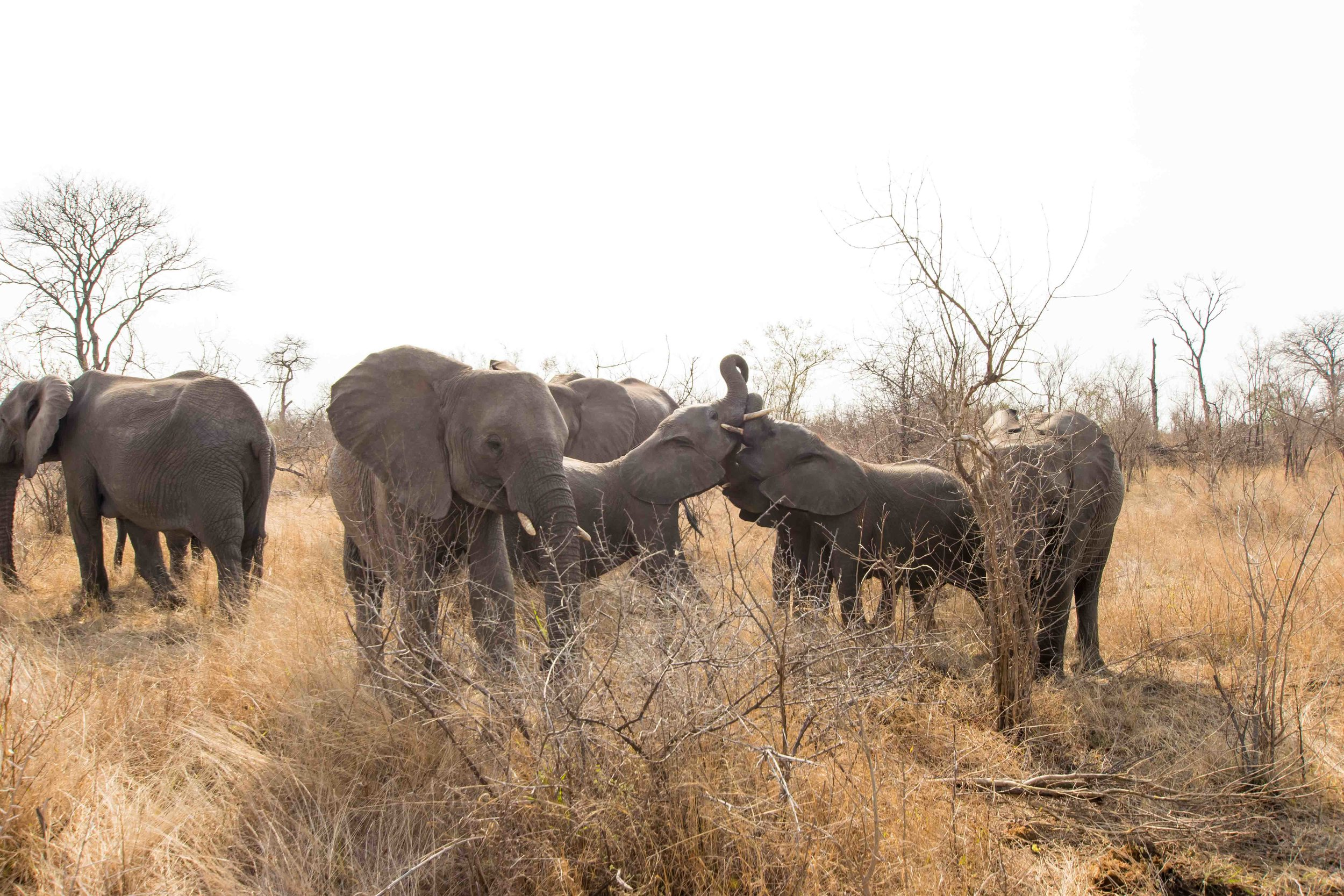 Round the corner to an entire herd of elephants - not upser about it.... yet