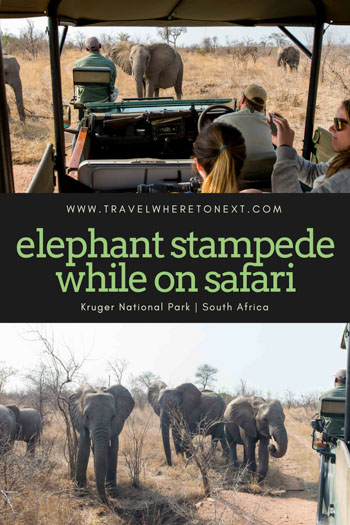 Yes, I experienced a full on elephant stampede while on safari in Kruger. Read the full story