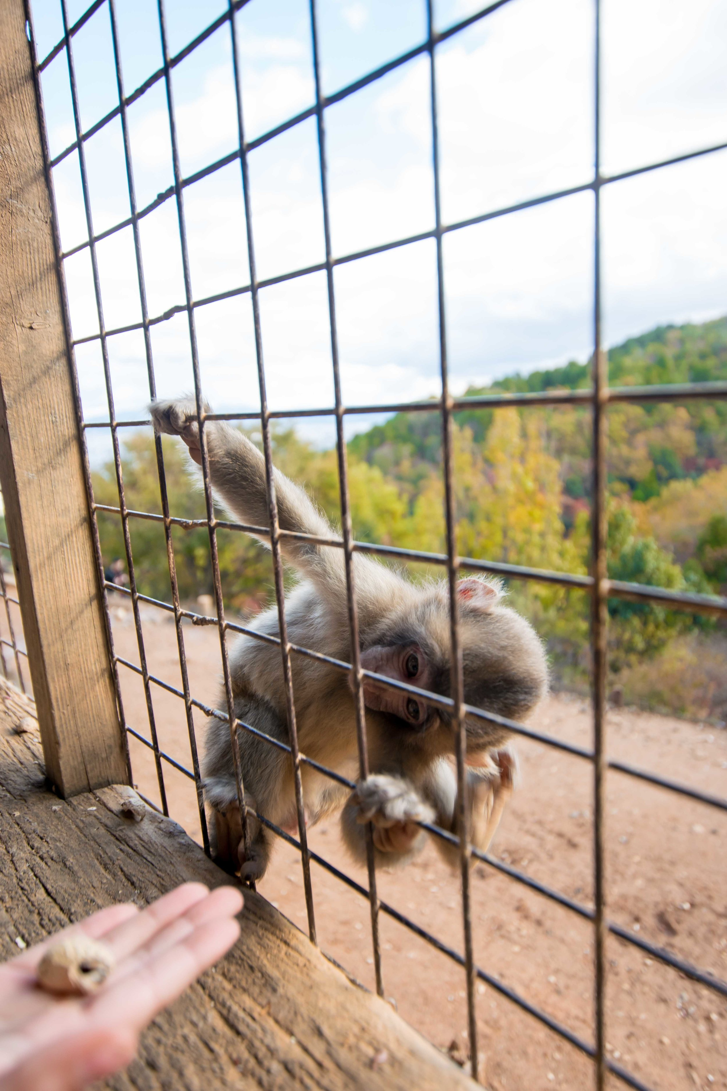 Monkey Park in Arayshimaya