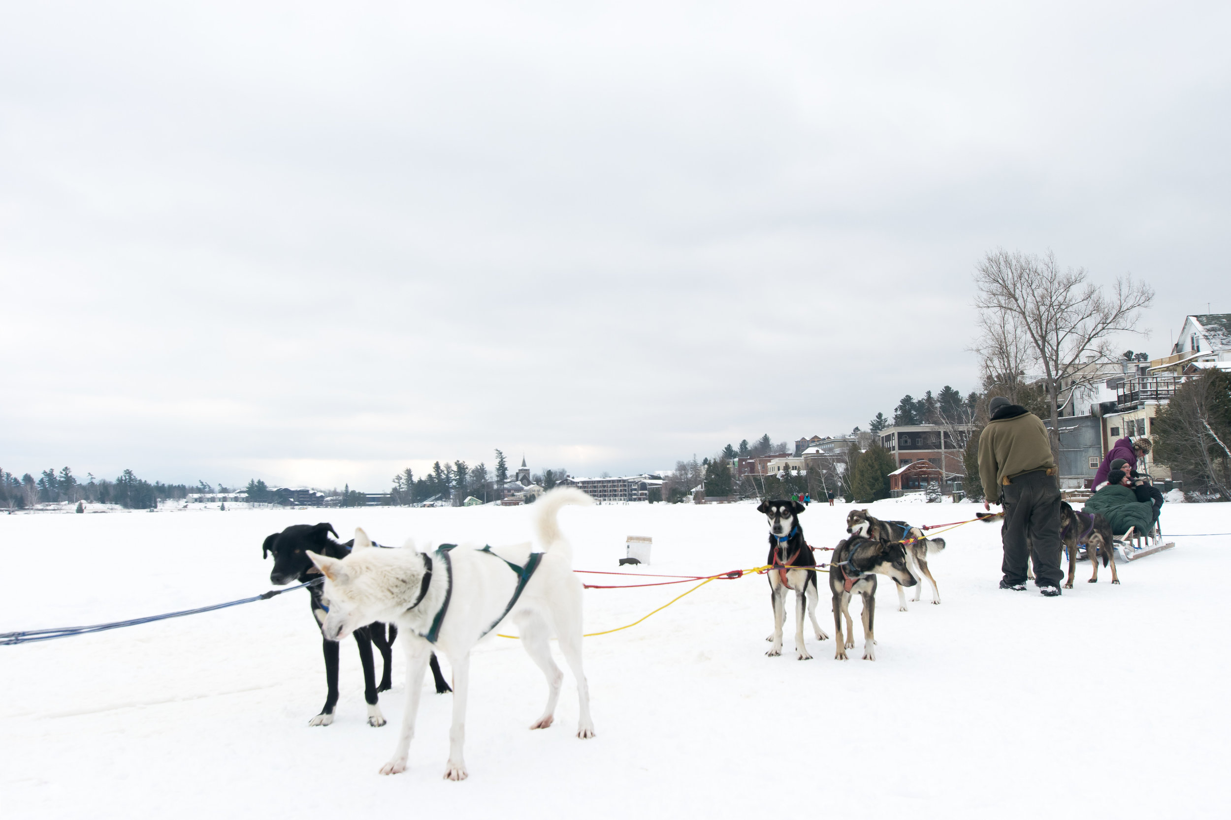 Take a dog sled ride on Mirror Lake when it is frozen over!