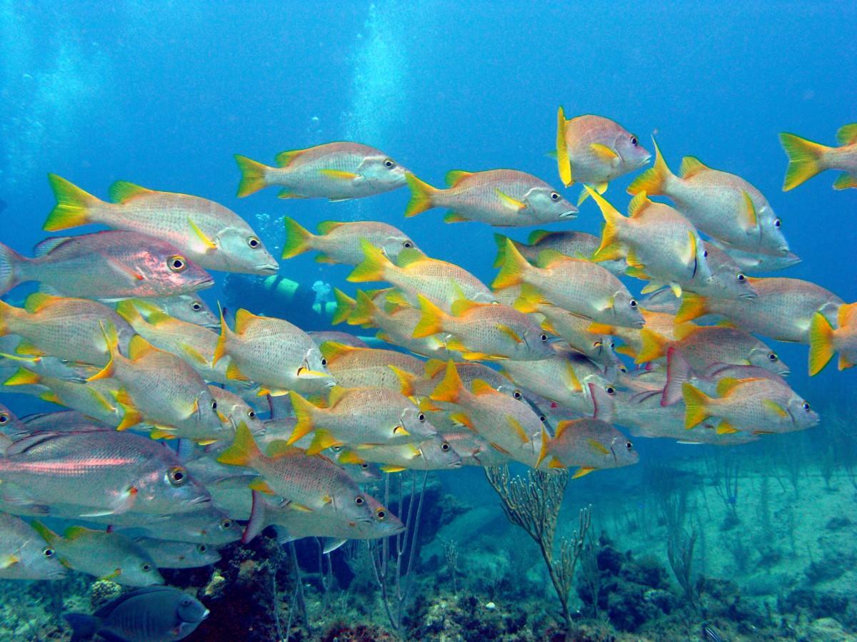 Scuba Diving Bay of Pigs   Cuba