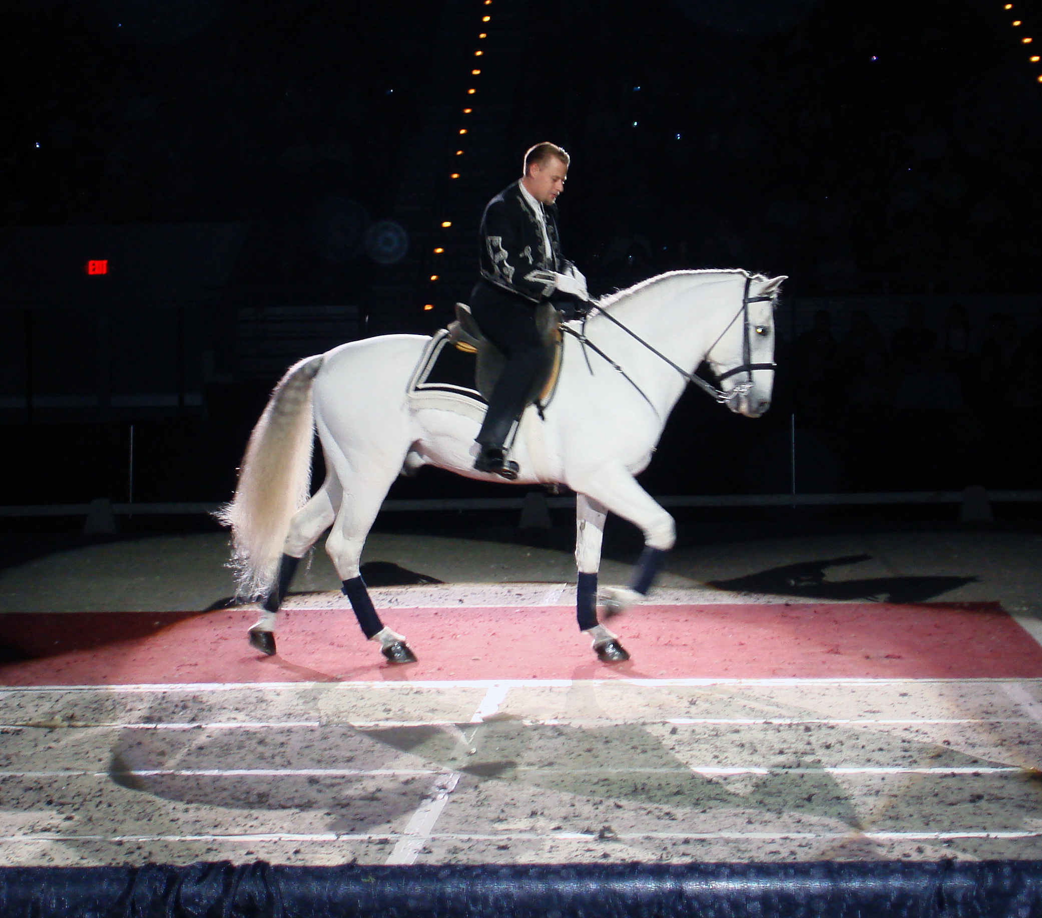 One of the most unique things to do in Vienna is see the  Lipizzaner Stallions