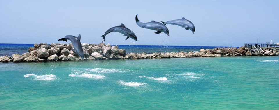 While in Ocho Rios please do not visit Dolphin Cove
