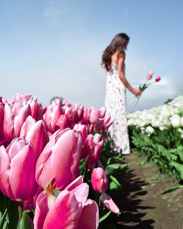 This #EarthDay remember that we should be looking after and caring for  the only planet we've got every second of every day. And also don't forget to enjoy it. — Also, this photo was taken at a U-pick tulip site outside Amsterdam. Never walk in flower beds that are not your property and try not to disturb nature for the perfect photo. 🙃 — #dametraveler #sheisnotlost #WeAreTravelGirls #femmetravel #SidewalkerDaily #Girlaroundworld #passionpassport #darlingescapes #gltLOVE #mylpmag #ladiesgoneglobal #lovetheworld #BBCtravel #fodorsonthego #timeoutsociety #iamatraveler #girlsmeetglobe #traveloffpath