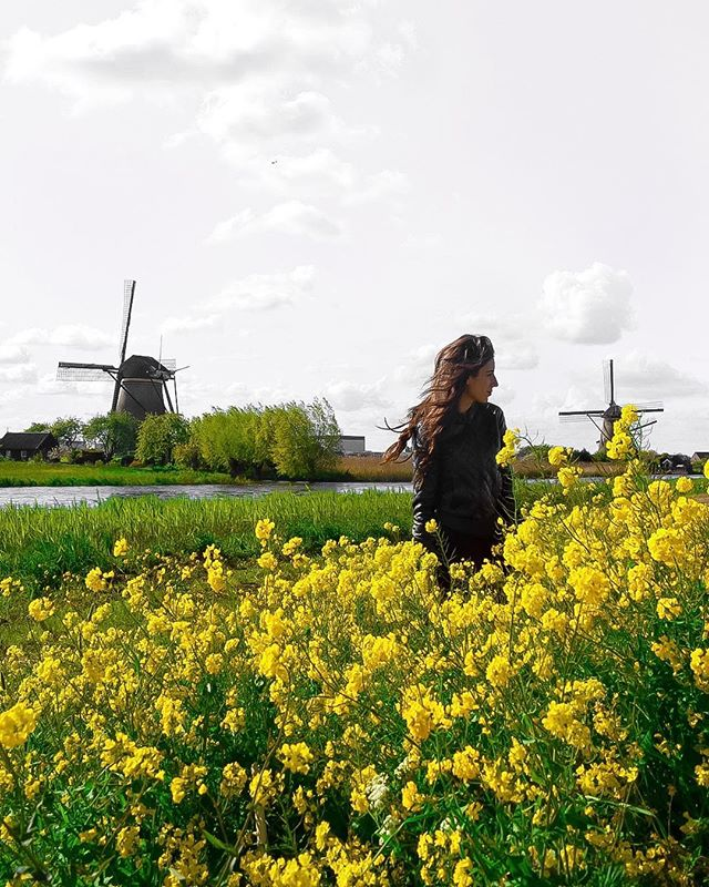 Windmills and spring flowers make me want to move to the Netherlands ASAP. — #dametraveler #sheisnotlost #WeAreTravelGirls #femmetravel #SidewalkerDaily #Girlaroundworld #passionpassport #darlingescapes #gltLOVE #mylpmag #ladiesgoneglobal #lovetheworld #BBCtravel #fodorsonthego #timeoutsociety #iamatraveler #girlsmeetglobe #traveloffpath