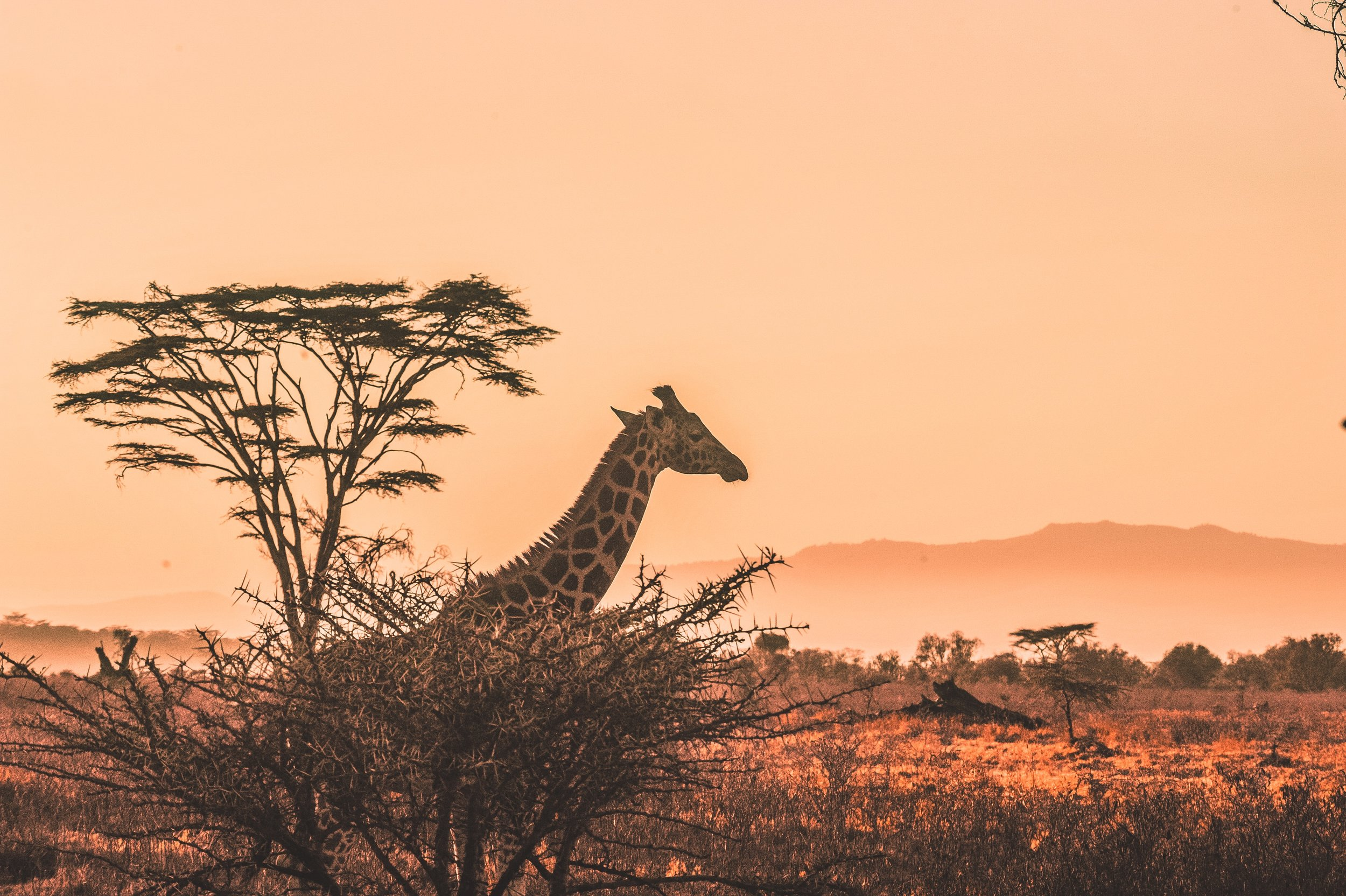 There are so many places to go on Safari in Africa, but a Serengeti Safari is truly magical.