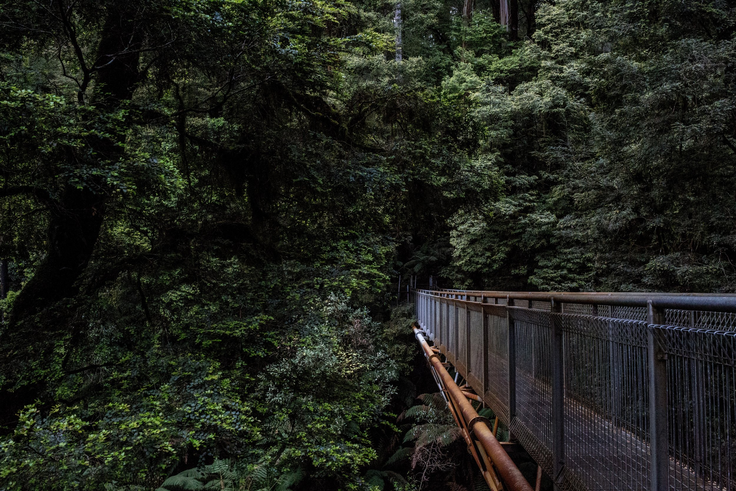 A peaceful place to visit is the rainforest walk near Otway National Park.