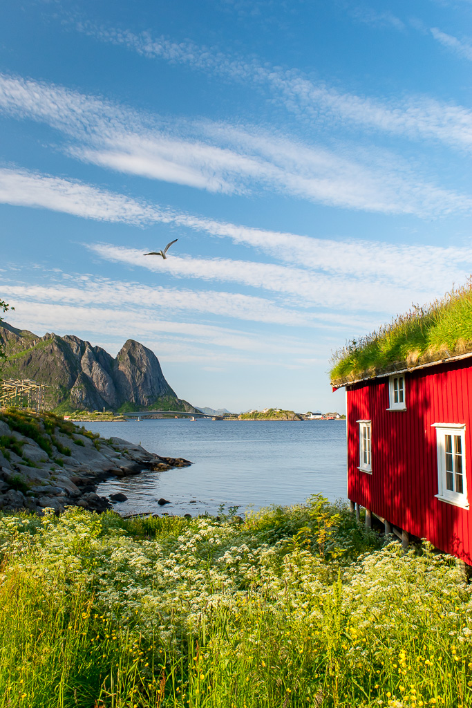 Renting a car in Lofoten will take you to gorgeous viewpoints like this one in Reine.