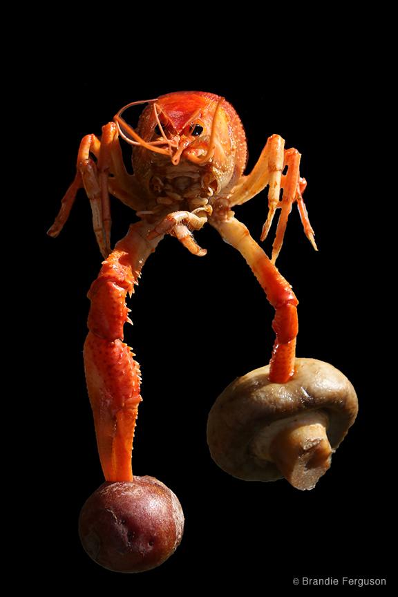 Crawfish 1 by Brandie Ferguson