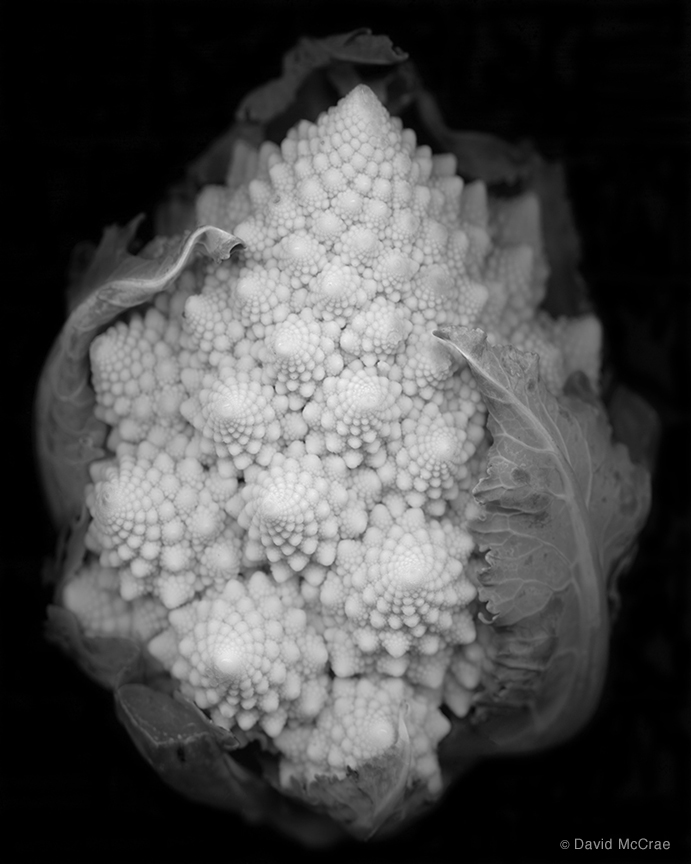 Romanesco Broccoli by David McCrae