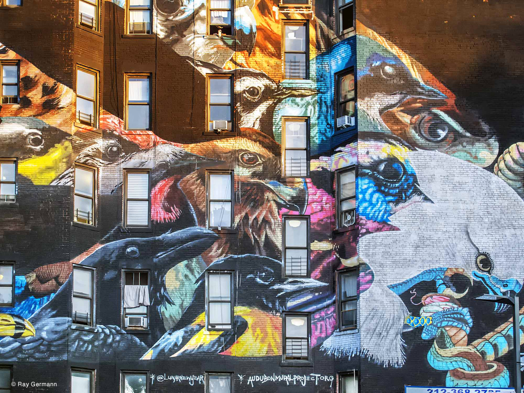 Mural, Audubon Mural Project, NYC by Ray Germann