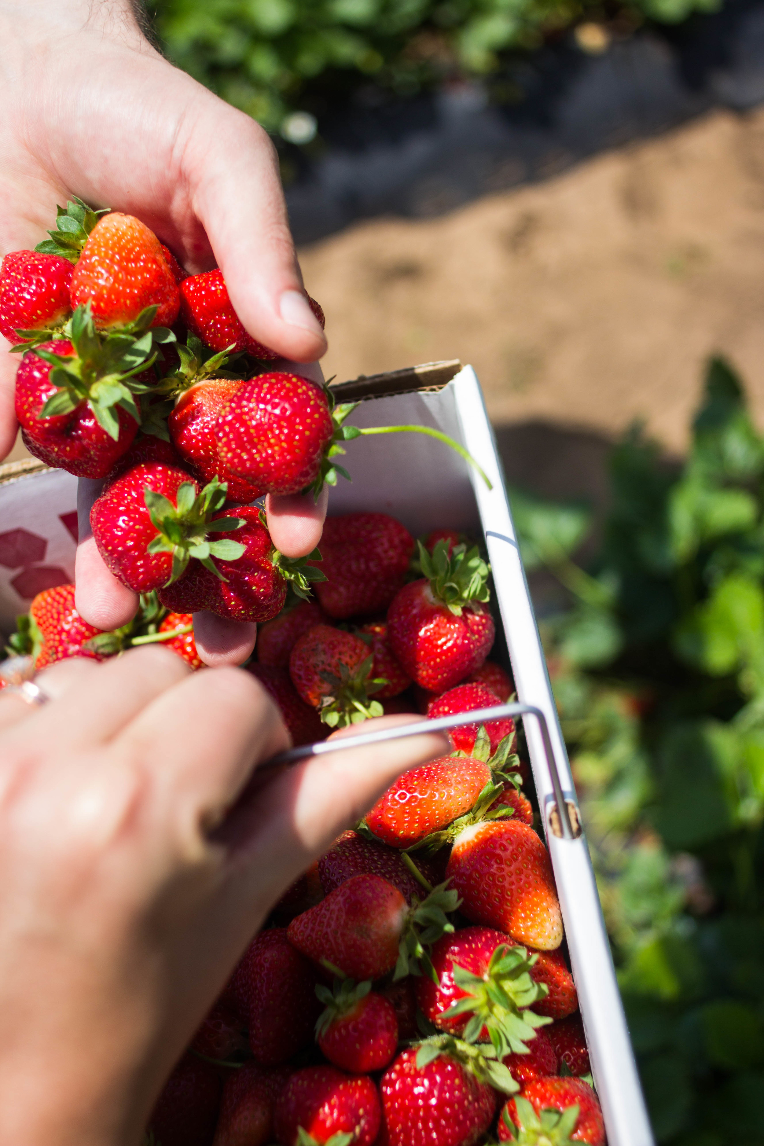 Summer Strawberries | All the Delights