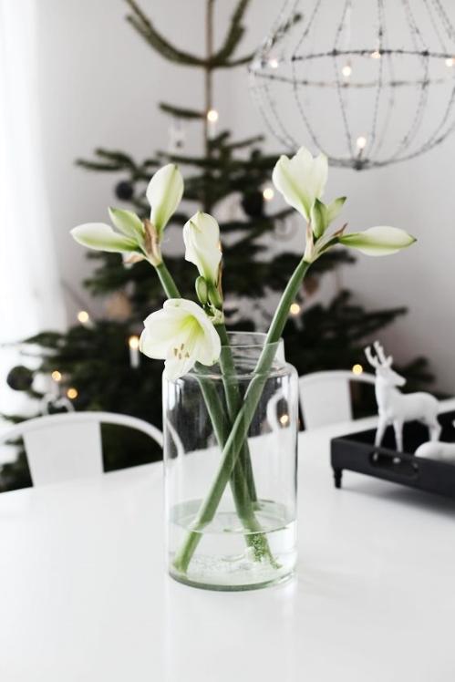 Winter Florals Amaryllis