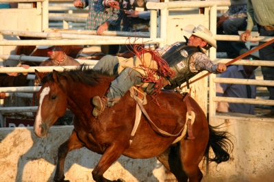 A bareback rider at the Fairfield Rodeo. Photo Credit: Steve Howen.