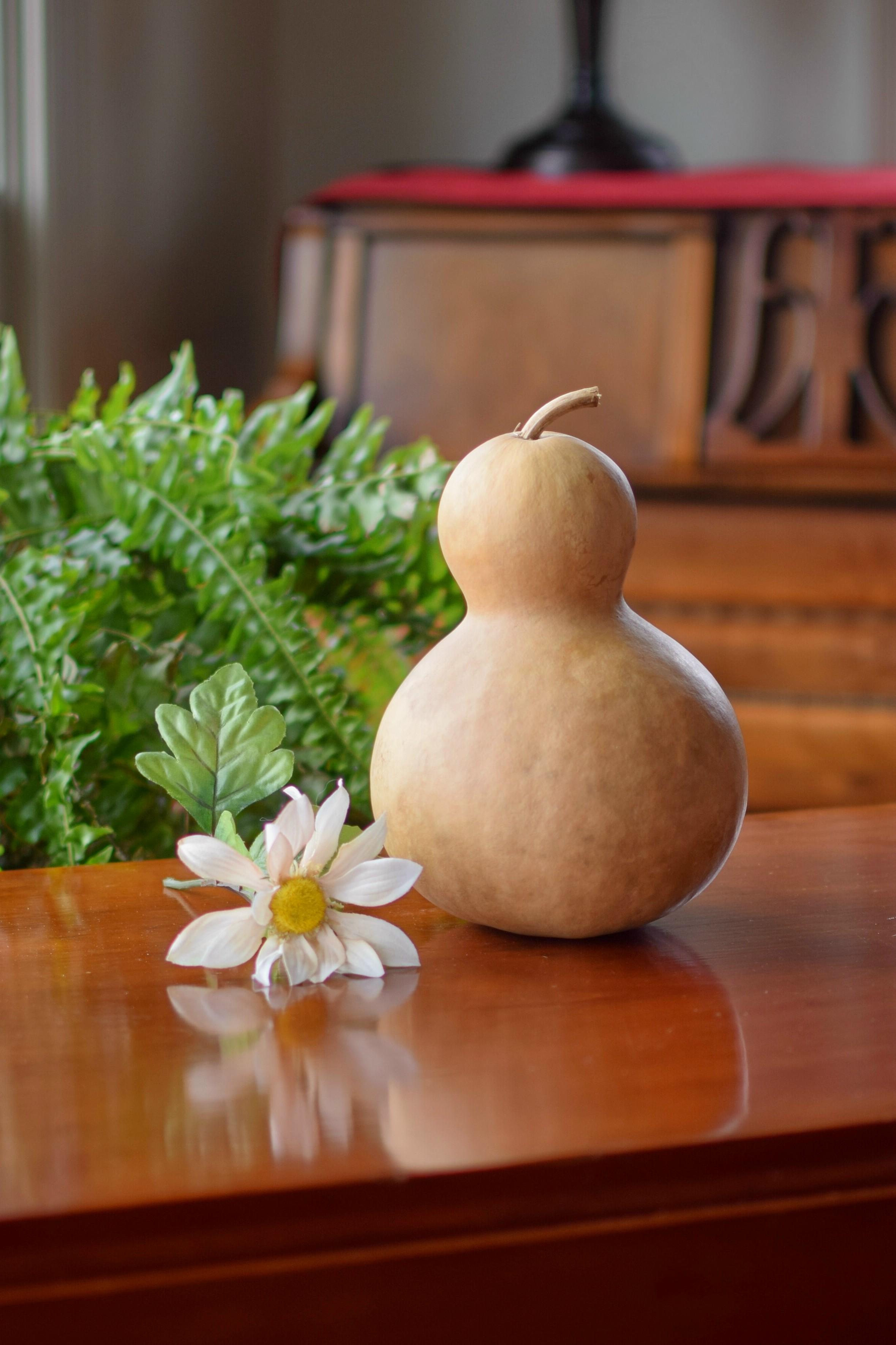 Raw_clean_5_inch_bottle_gourd_P.jpg