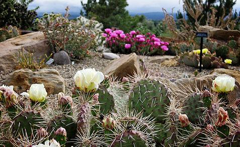Photo: courtesy Montrose Botanic Gardens