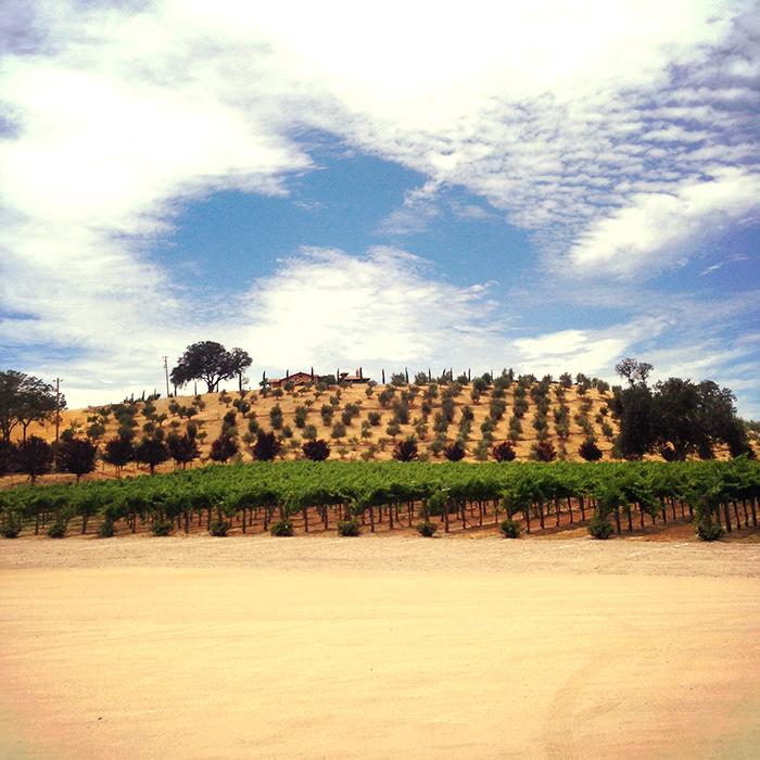 Paso Winery insolence + wine