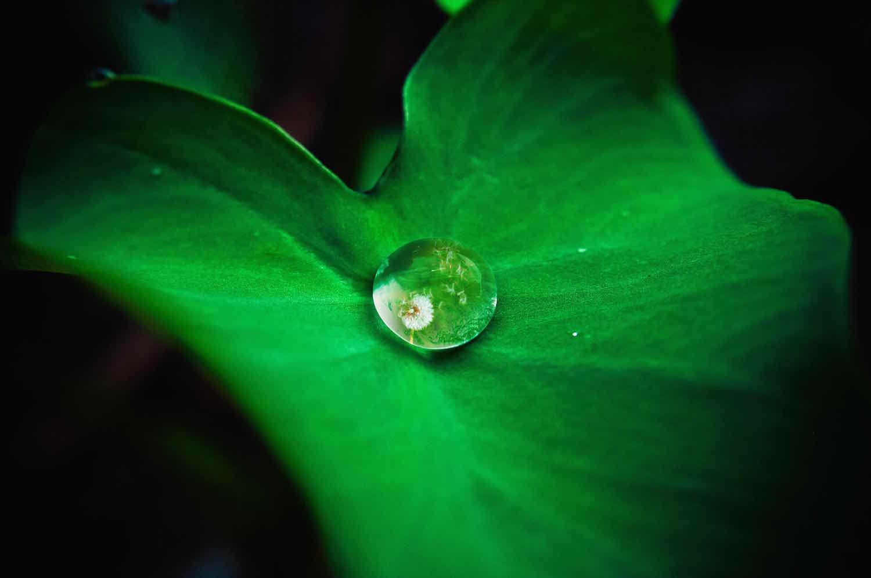 drop into stillness, lifeisaprettyword.com