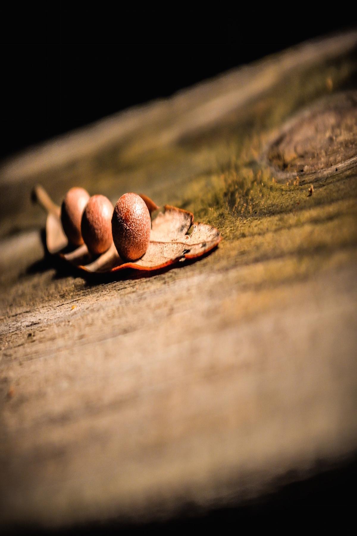 dreamof oak, lifeisaprettyword.com
