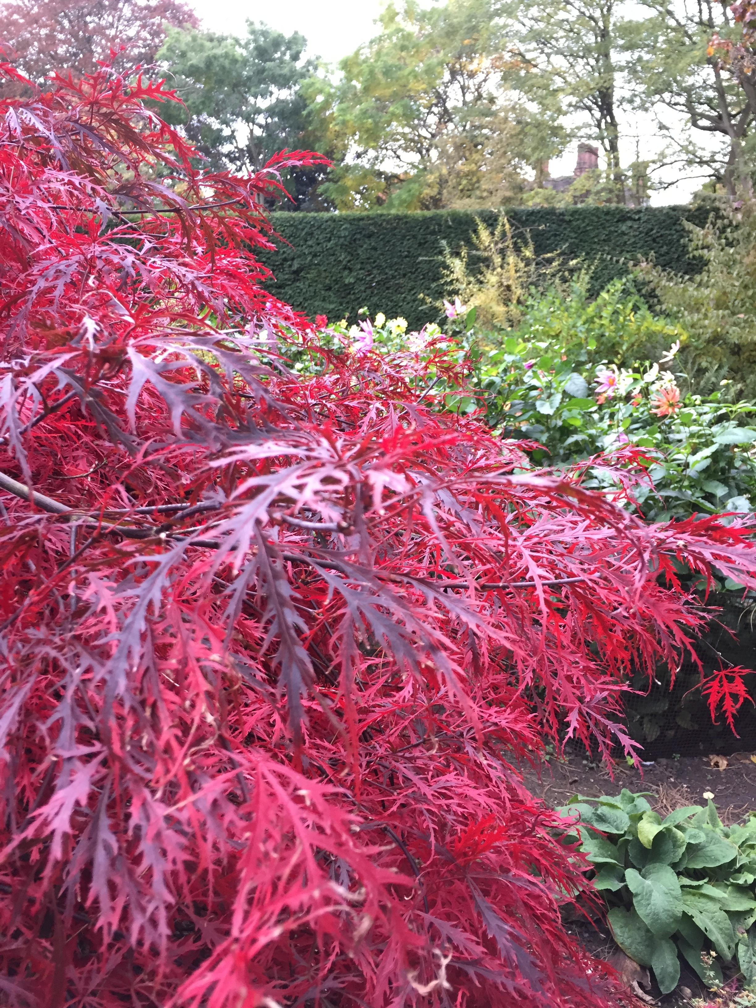 Autumn leaves at Goddards House and Garden