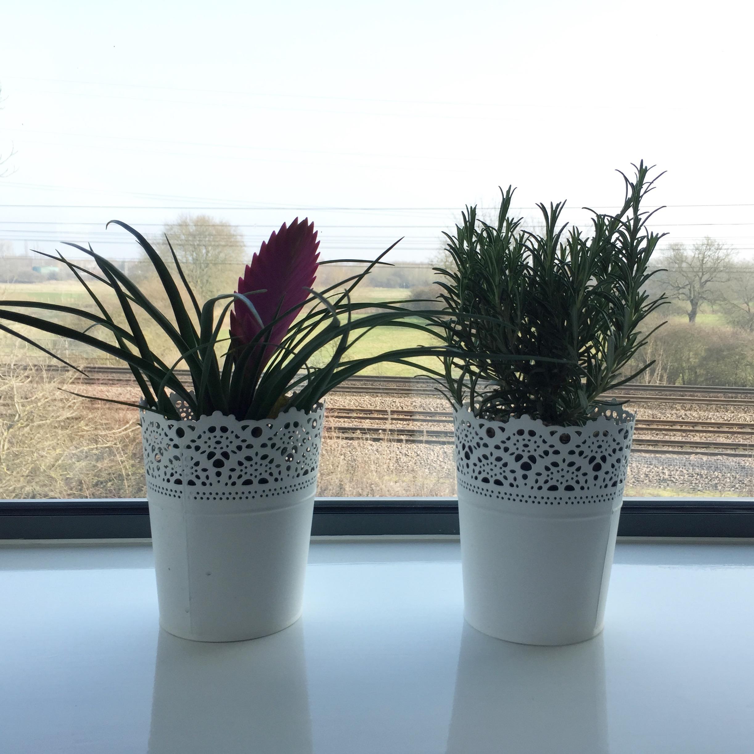 Ikea plants on windowsill