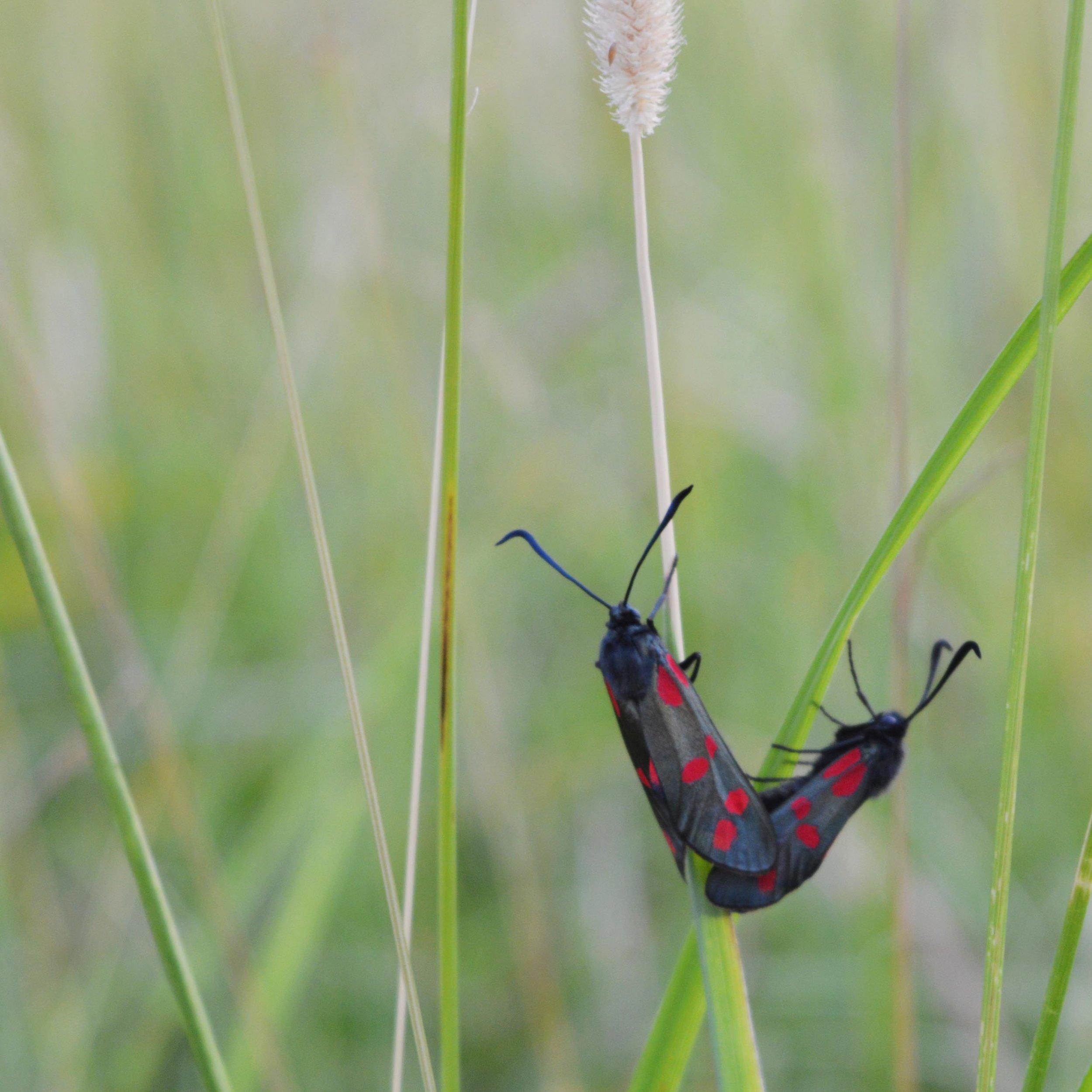 Moths in the field