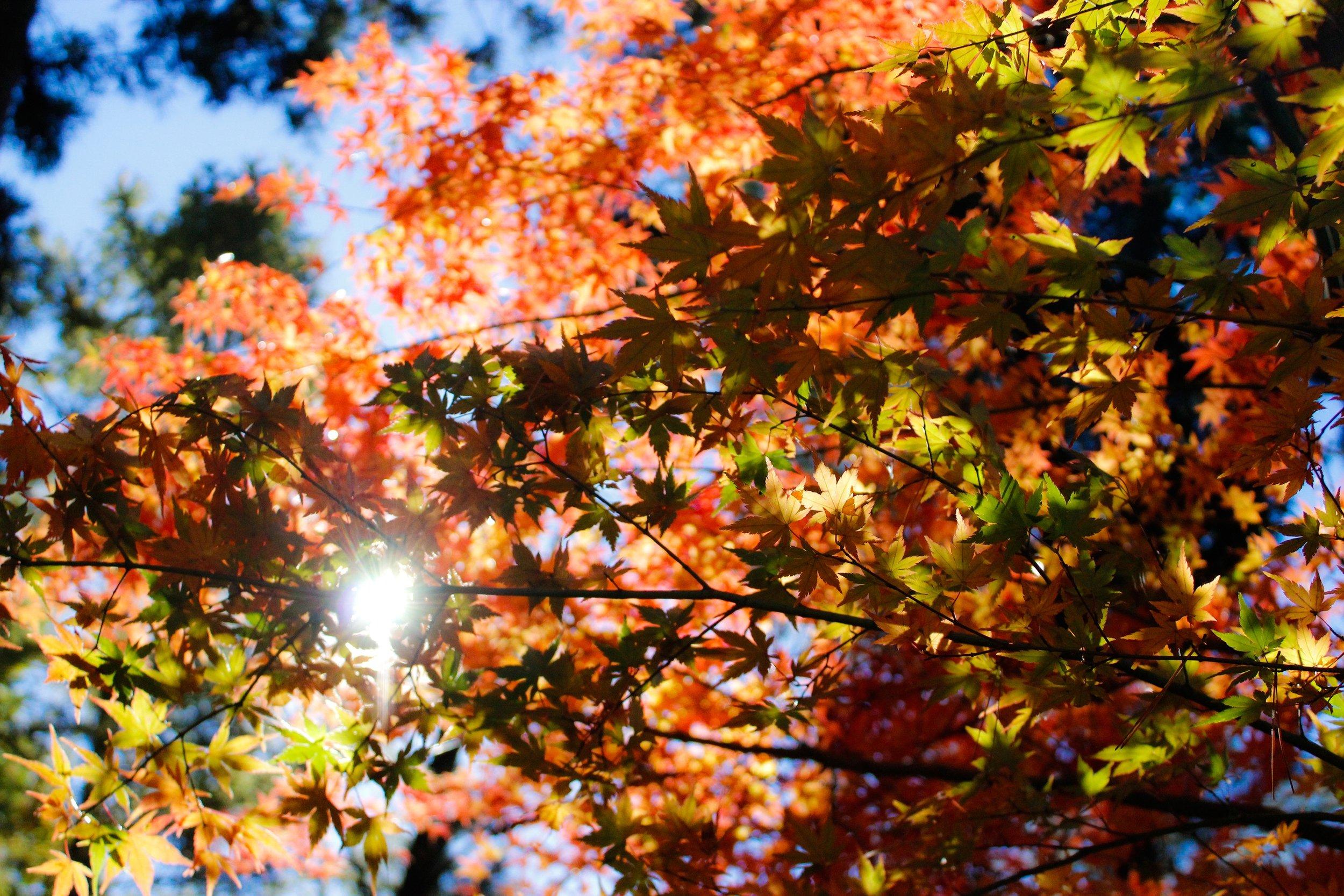 Autumn goals bethan Vincent