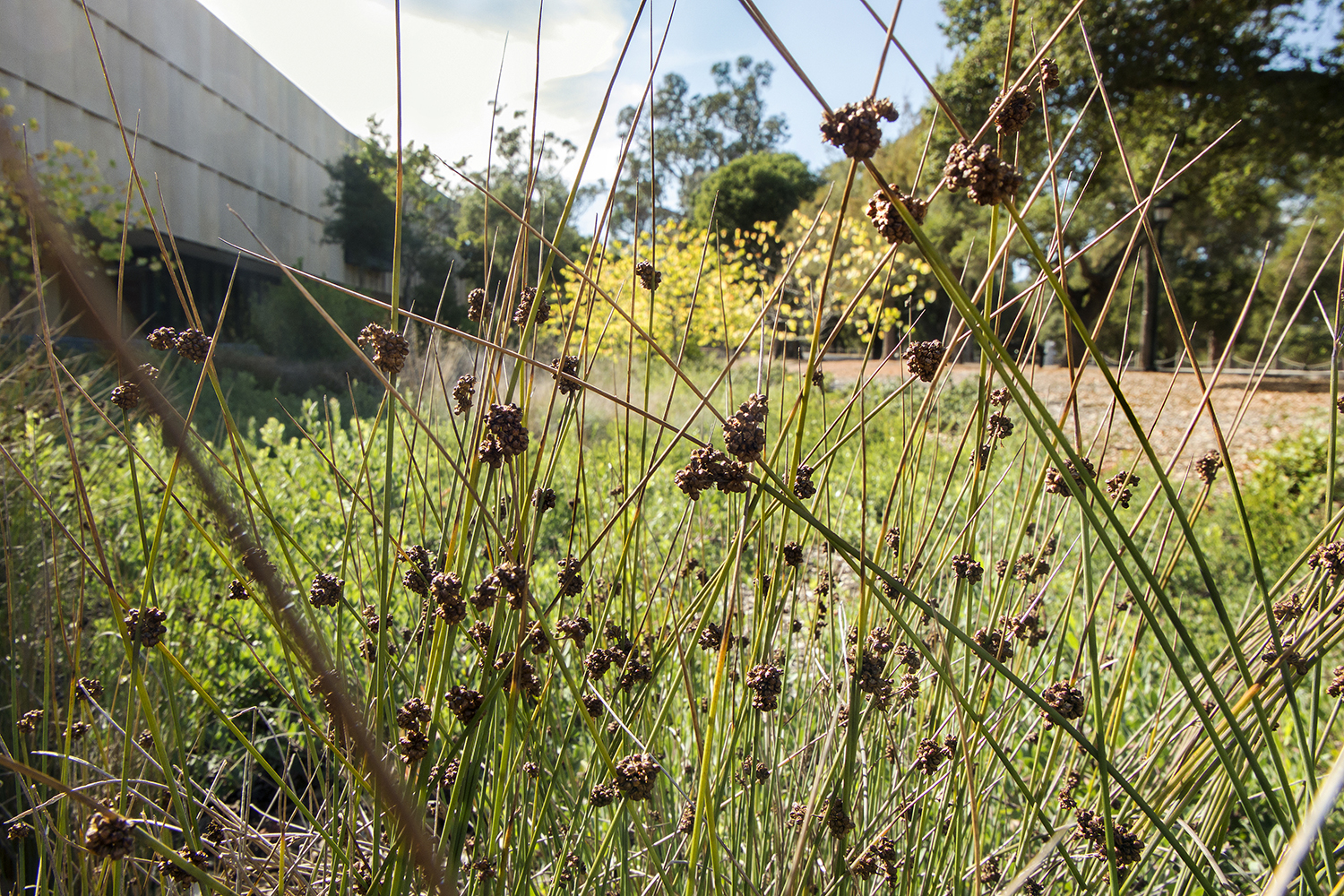 Detail: Habitat's-eye-view of the bioswale