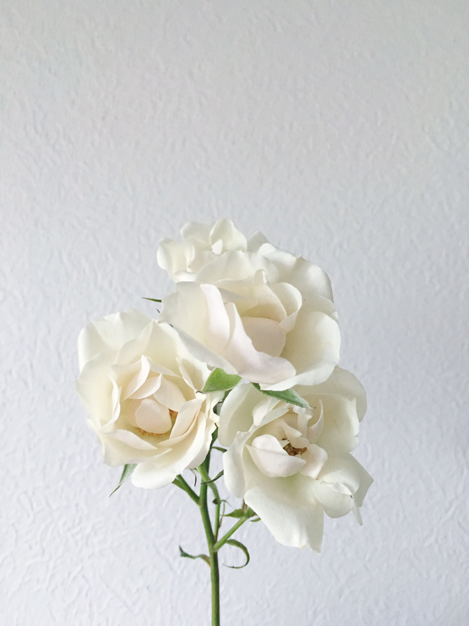 WHITE MAJOLICA SPRAY ROSE