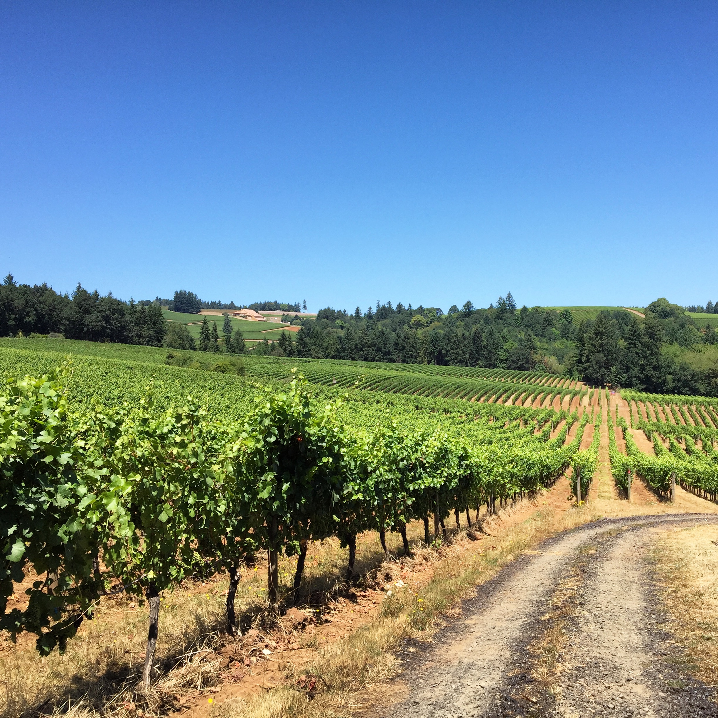 Take a Weekend Wine Trip to Oregon's Willamette Valley (Architectural Digest)   An easy drive from Portland will take you to one of the best under-the-radar wine destinations