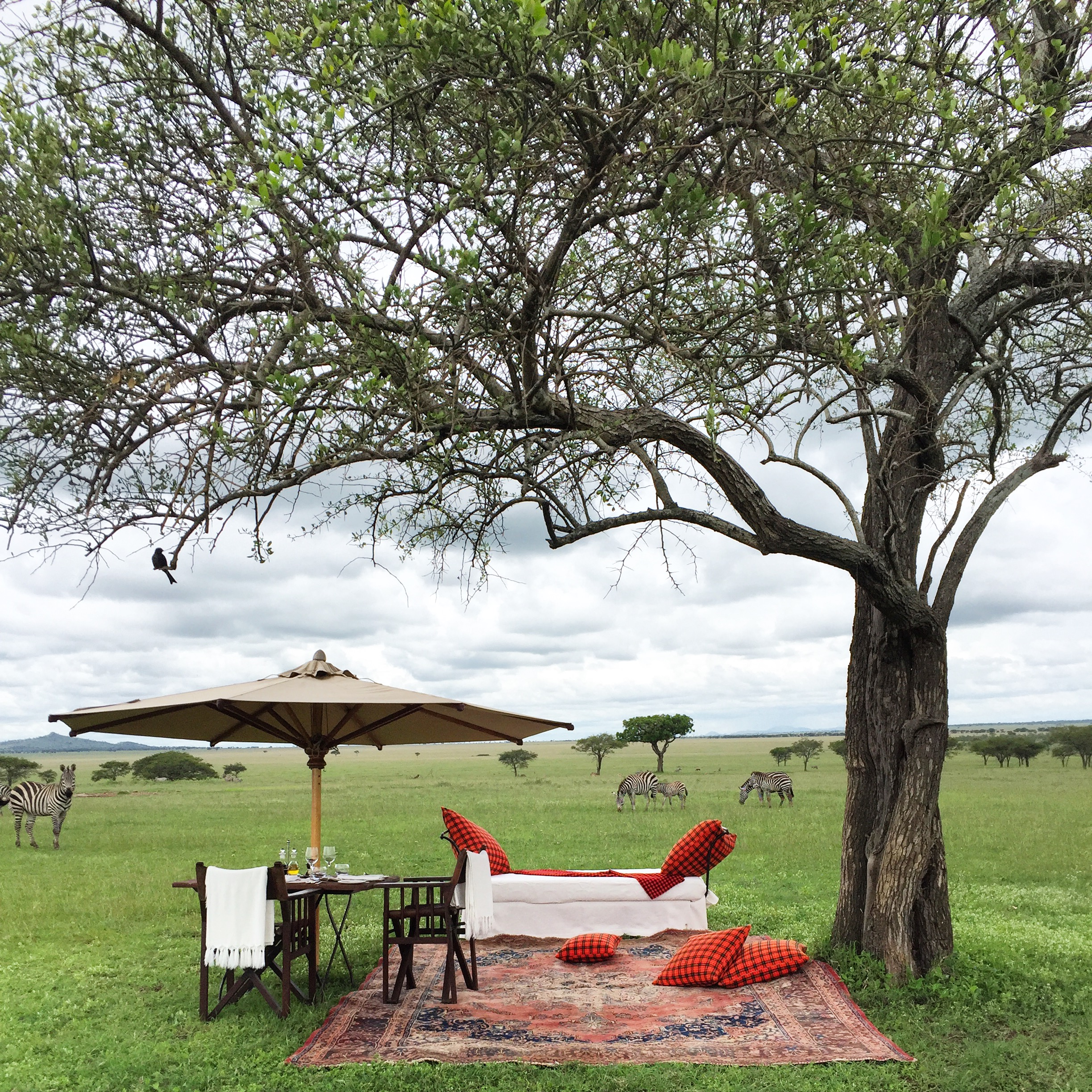 Why You Can (and Should) Take a Serengeti Safari Alone (AFAR)   Safaris aren't just for honeymooners. In fact, their mix of structured itineraries and communal dining is great for individual travelers