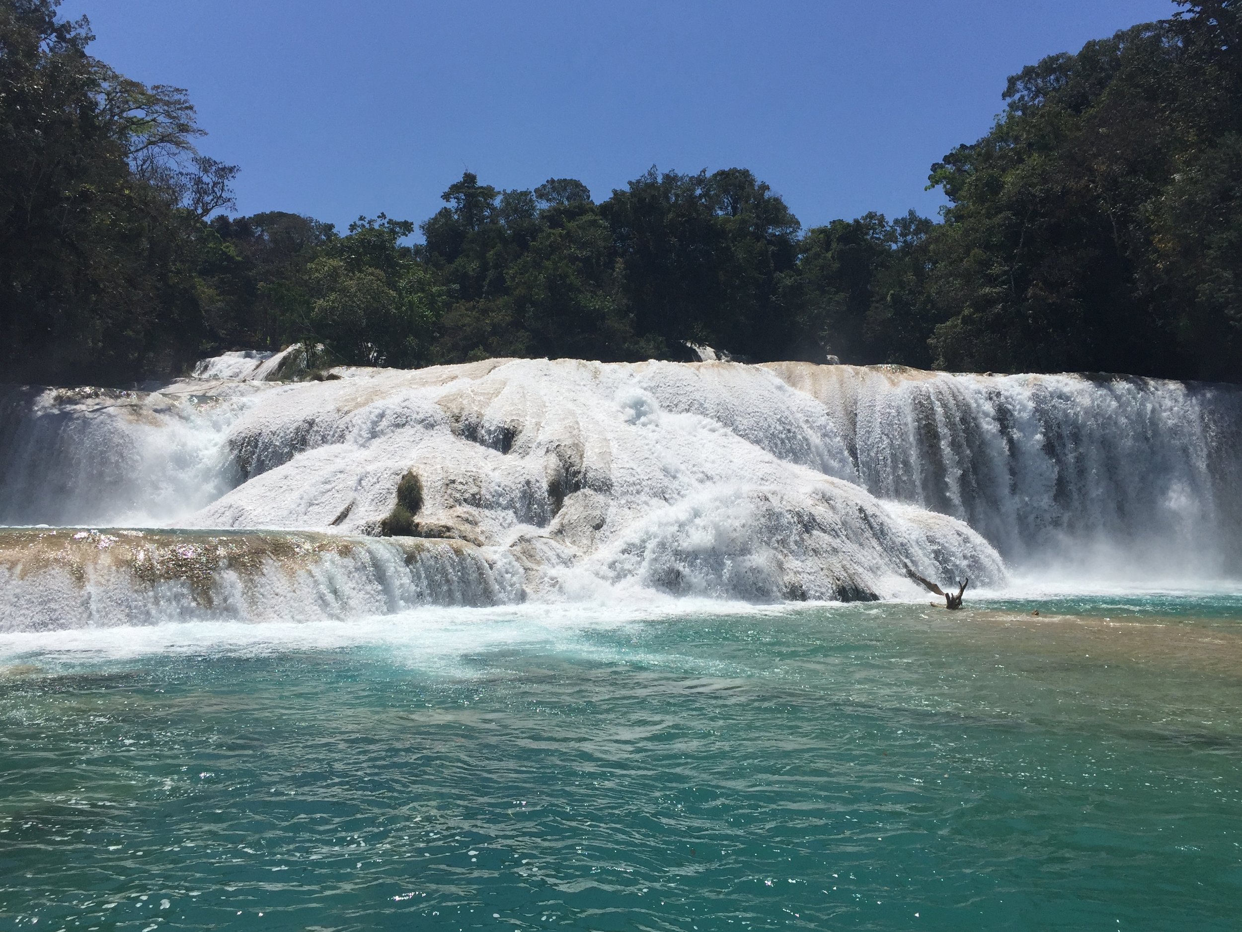 Cascadas de Agua Azul, beautiful aqua color caused by the high content of calcium carbonate and other minerals in the water encasing everything in its path with a thick shell-like coating of limestone.