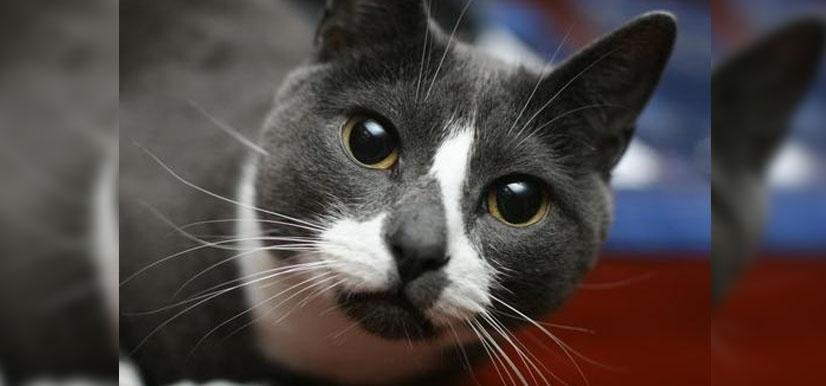 Sockington | Twitter's Favorite Cat